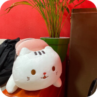 Soft sushi cat near a plant